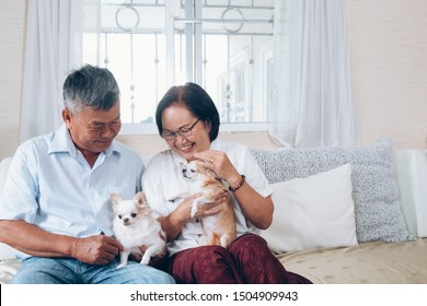 Asian senior couple holding the dogs on the couch at thire house.