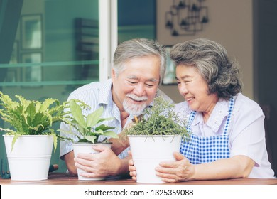 Asian senior couple smile watering plants take care of trees , happy couple gardening - lifestyle senior concept