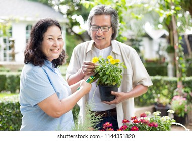 asian senior female and asian senior male care plant and cut flower in the garden, retirement activity, family time