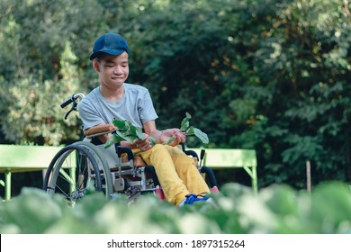 Asian special child on wheelchair happy on vegetable garden background,Activity in outdoor classroom with school, Life in the education age of disabled children,Happy disabled kid concept.