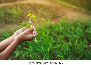 Asian student scientist holding a test tube with plant