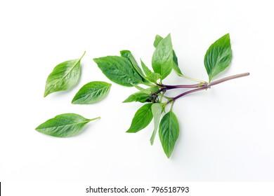 Asian Thai basil fragrant green herb on white background