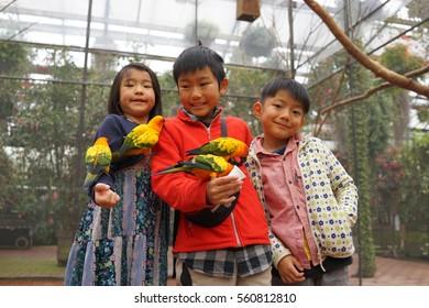 asian three kids boy and girl play with love birds lorikeet
