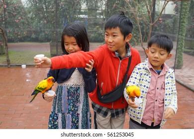asian three kids boy and girl play with love birds lorikeet.