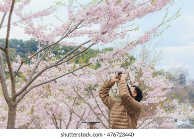 Asian tourist man taking closeup photo of the beautiful blooming cherry flowers in the park - Soft focus - Selective focus