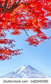 Asian Travel Destinations. Fuji Mountain in Kawaguchiko in Japan With Traditional Red Maples in Foreground. Picture taken During Fall Season. Vertical image