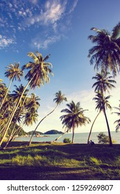 asian tropical coconut palm trees on the beach with beautiful sky.vacation and travel concept with nature.modern colour tone filter style.