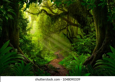 Asian tropical rainforest