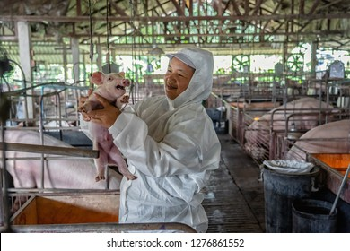 Asian veterinarian working and checking the healthy of baby pig in hog farms, animal and pigs farm industry