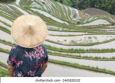 Asian villager in Asian rice terraces