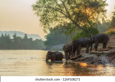 Asian wild family group Elephants walking in the outdoors natural river at deep forest at Kanchanburi province in Thailand