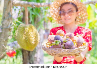 Asian woman agriculturist showing mangosteens in basket,tropical plant
