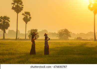 Asian woman in bali costume Indonesian national dress walking in rice field in morning.