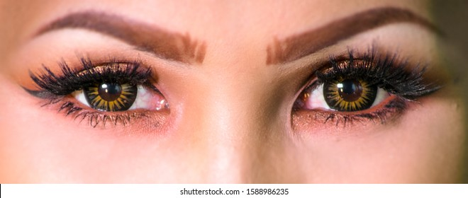 Asian woman eyes with colorful iris. Close up to a beautiful female face with perfect Eyelashes and symmetric  make up eyebrows. Macro photography of the yellow eyes of a Asian girl. Eyes of Malaysia