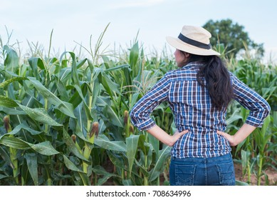 Asian woman farmer agriculture portrait in the corn field. Back view young female success in agricultural small business farming