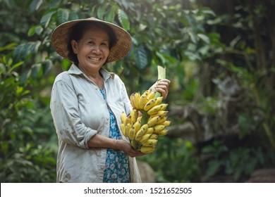 Asian Woman farmer holding banana at organic farm. Smile face of farmer. Banana farm Thailand.