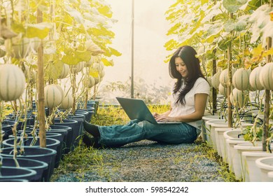 Asian woman farmer sitting rows of Cantaloupe melon tree and working on laptop computer in farm, technology application in agricultural growing activity. (Advertise concept and vintage color tone)