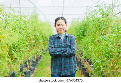 Asian woman farmer standing in organic tomato greenhouse plant -  young attractive small business owner work in agriculture farming