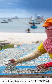 An Asian woman laying Mackerel minnows on net for drying at seaside, cloudy sea and traditional fishing boat in the backgrounds. South Thailand. Selective focus.