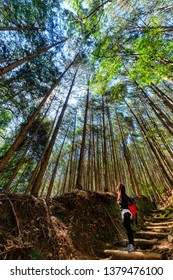 Asian woman looking up the high cypress trees in the Kumano Kodo forest, Japan