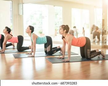 Asian woman practicing yoga indoors doing pilates exercise. Cow, Bitilasana, asana paired with Cat Pose