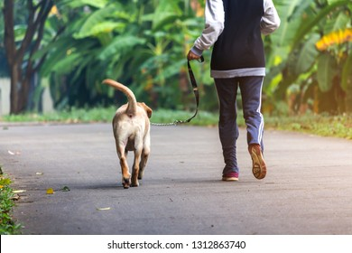 asian woman take labrador retriever jogging with a dog leash on the path in the park