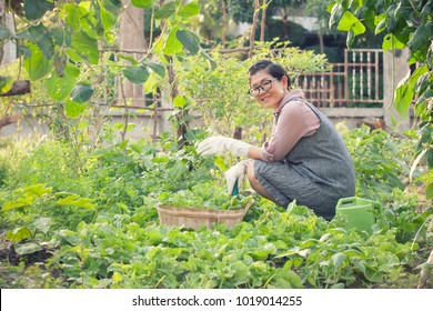 asian woman toothy smiling face in home gardening working