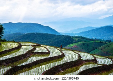 Asian woman travel nature. Travel relax. Walking take a photo on the  field rice in rainy season.
