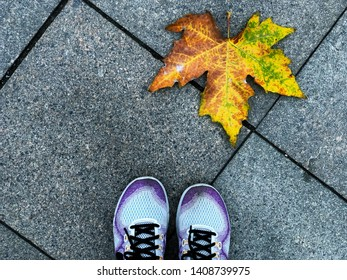 Asian woman wear purple sport shoes standing on Footpath brick block with a big yellow-green maple leaf falling on a pavement stone floor in outdor park or garden in autumn season.