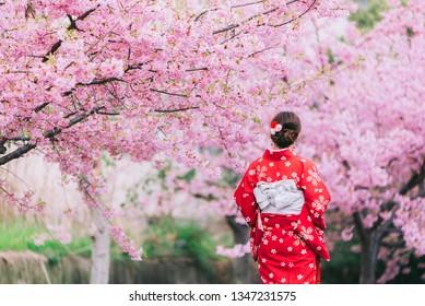 Asian woman wearing kimono with cherry blossoms,sakura in Japan.