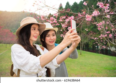 Asian women taking phone picture of cherry-blossom or taking selfie self portrait while on sakura park in japan or korea. Girlfriends tourist looking at view taking snapshots during travel.
