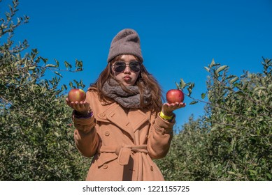 Asian women tourist visit apples on an apple-tree in garden. harvesting fruits apples in orchard