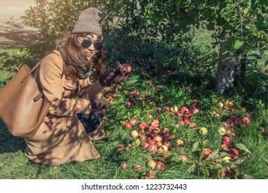 Asian women tourist visit and picked red apples on an apple-tree in garden. harvesting fruits apples in orchard at Chicago.