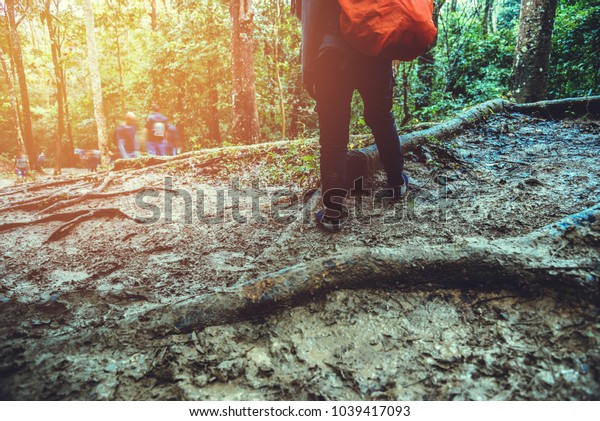 Asian women travel  nature. Travel relax. Backpack walk in the forest. Thailand