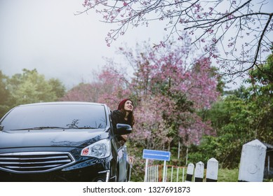Asian women travel relax in the holiday. Traveling by car park. happily With nature, pink sakura flower. In the winter
