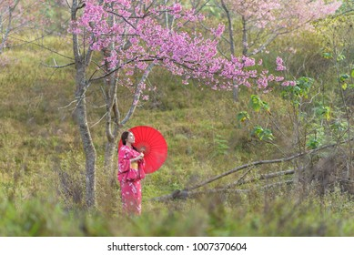 Asian women wearing kimono traditional in Himalayan cheery blossome park, with red umbrella. women  nature flower concept.