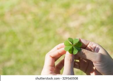 Asian Women's hands holding lucky clover leaf on green grass background.