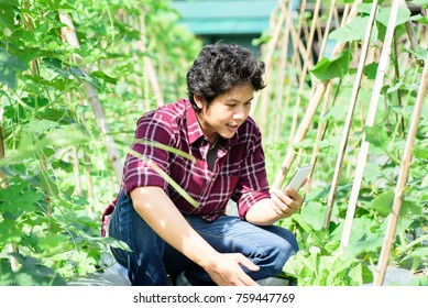 Asian young farmer using smartphone for management in agricultural field