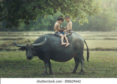 Asia,Thailand,The boys read books on the backs of buffalo in a field.