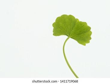 Bitter Kola Images, Stock Photos & Vectors | Shutterstock