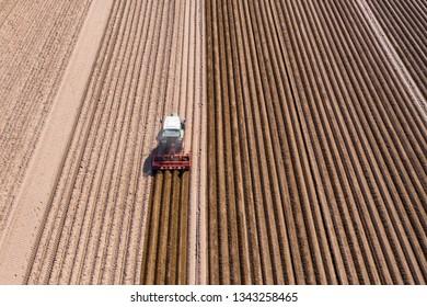 Asparagus field, Tracktor edited asparagus fields, Bergstrasse, Hesse, Germany