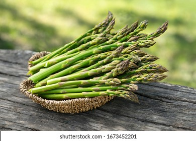 Asparagus. Fresh Asparagus. Pickled Green Asparagus. Bunches of green asparagus in basket, top view- Image
