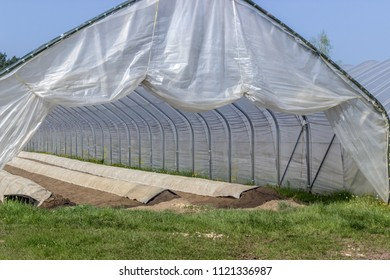 Asparagus growing in a foil tent with long hillside beds