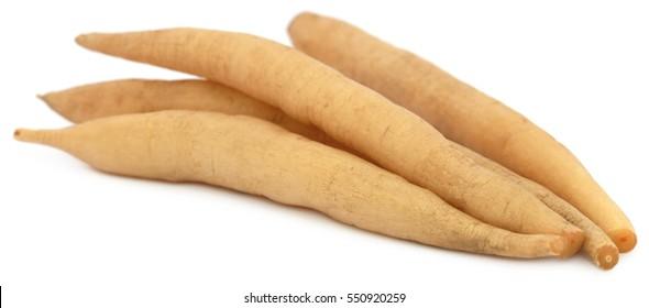 Asparagus racemosus or medicinal Shatavari of Indian subcontinent