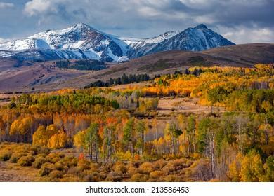 Aspen fall colors on Conway Summit, Eastern Sierra, California.