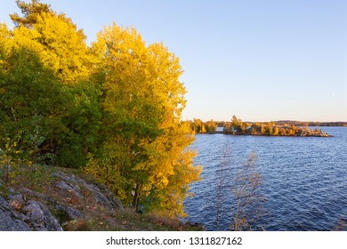 Aspen foliage in autumn colors near lake landscape