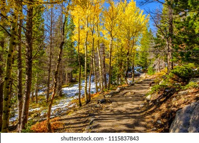 Aspen grove at autumn in Rocky Mountain National Park. Colorado, USA.