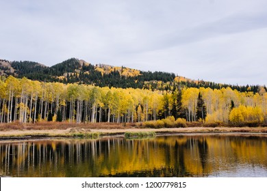 Aspen Grove with Yellow Leaves Reflecting in an Alpine Lake in Fall in Utah Mountains