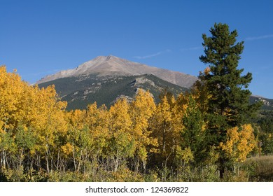 Aspen trees turning to a bright yellow in front of Longs Peak, in Rocky Mountain National Park near Estes Park, Colorado.