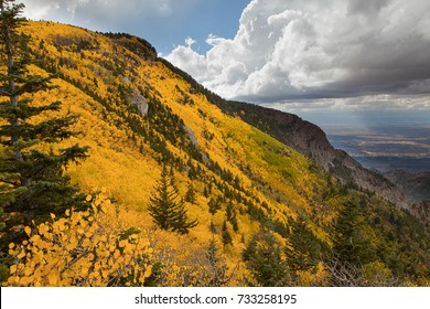 Aspen turning colors on Sandia Crest in the fall